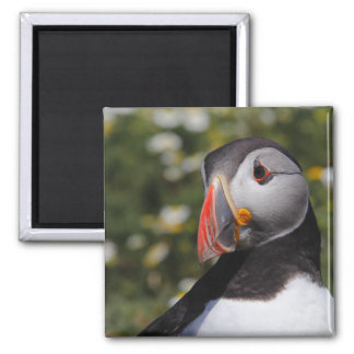 Puffin Profile Magnet