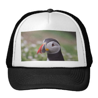 Puffin Side View Hats