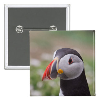Puffin Side View Pinback Button
