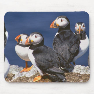 Puffin-tastic Mouse Pad