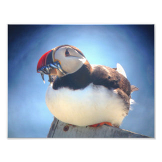 Puffin with Fish Wall Print