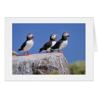 Puffins on the Farne Islands Card