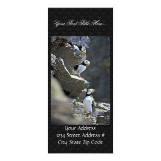 Puffins Rack Card