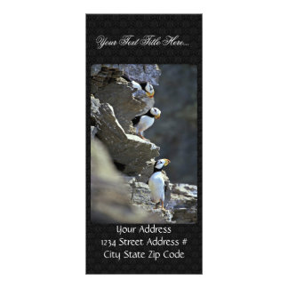 Puffins Rack Cards