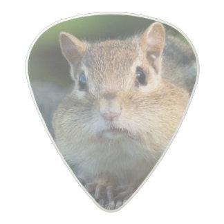 Puffy Cheeked Chipmunk Acetal Guitar Pick