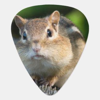 Puffy Cheeked Chipmunk Guitar Pick