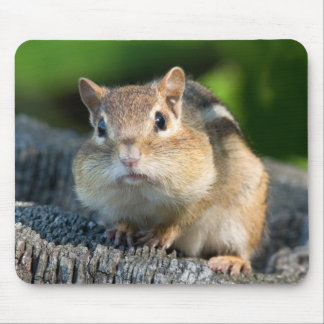 Puffy Cheeked Chipmunk Mouse Pad
