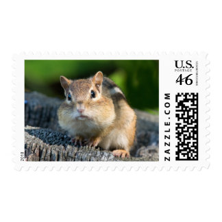 Puffy Cheeked Chipmunk Stamps