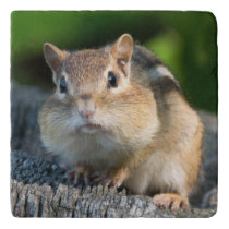 Puffy Cheeked Chipmunk Trivet