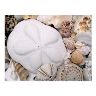 Puffy White Sand Dollar Photography Blank Postcard