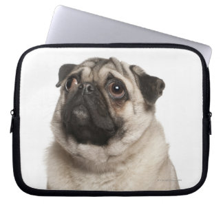 Pug (13 months old) looking up laptop computer sleeve