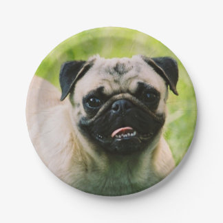 pug-13 7 inch paper plate