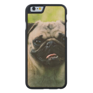 pug-13 carved® maple iPhone 6 slim case