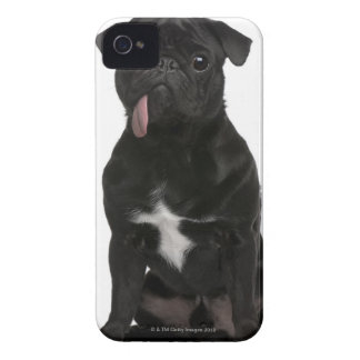 Pug (1 year old) sitting with its tongue hanging blackberry bold cases