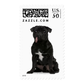 Pug (1 year old) sitting with its tongue hanging postage