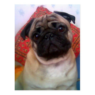 pug 4.png postcard