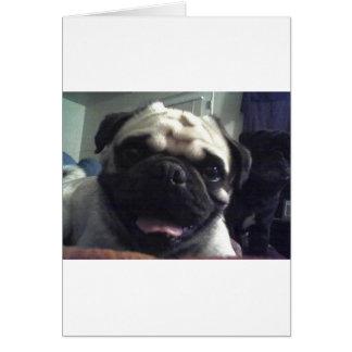 Pug 5.png card