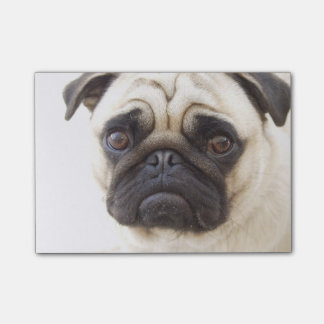pug-7 post-it® notes