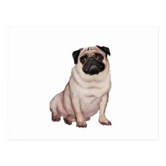Pug (A) Postcard