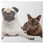Pug and Burmese cat Ceramic Tiles