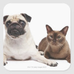 Pug and Burmese cat Stickers