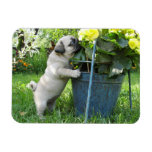 Pug and Flowers Magnet