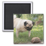 Pug and Turtle Meeting - Customize 2 Inch Square Magnet