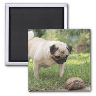 Pug and Turtle Meeting - Customize Magnet