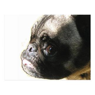 Pug Angel Face Postcard