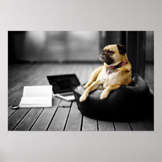 Pug at Rest Poster
