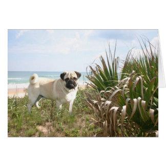 Pug Beachgrass Card