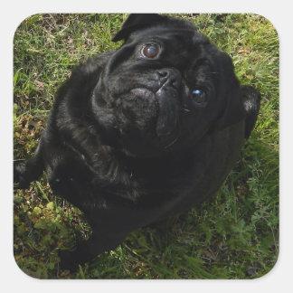 pug black full square sticker