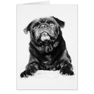 Pug - Black PUG  Black & White Card