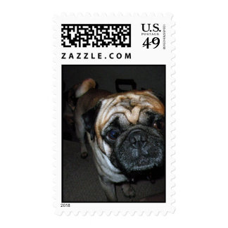 Pug Breed Stamps