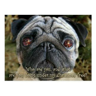 Pug Christmas postcard - Look into her eyes...