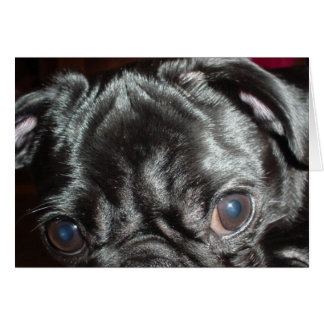 Pug Closeup Card - Blank Inside