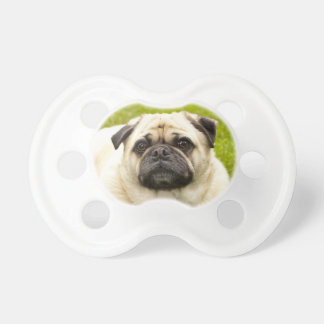 Pug cute dog beautiful photo baby soother pacifier