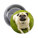 Pug cute dog beautiful photo, custom button