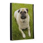 Pug cute dog beautiful photo, gift iPad folio cases