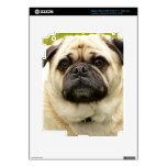 Pug cute dog beautiful photo, gift iPad 3 skin