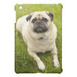 Pug cute dog beautiful photo, gift iPad mini case