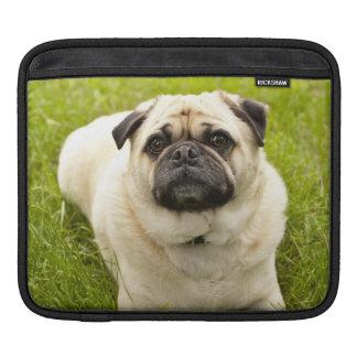 Pug cute dog beautiful photo, gift iPad sleeve
