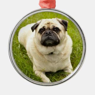 Pug cute dog beautiful photo ornament, gift