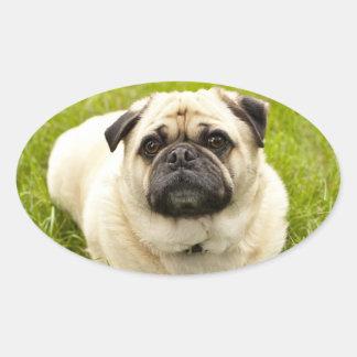 Pug cute dog beautiful photo stickers, gift