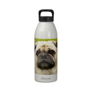 Pug cute dog funny face beautiful photo, gift water bottles