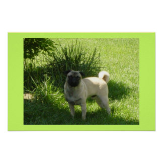 Pug day poster
