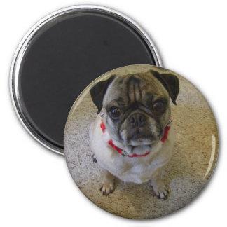 Pug Dog 2 Inch Round Magnet