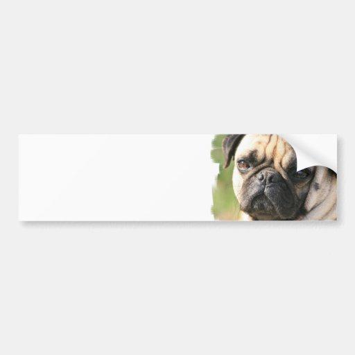Pug Dog Breed  Bumper Sticker