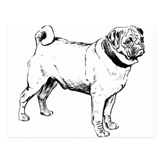 Pug Dog Breed Postcard
