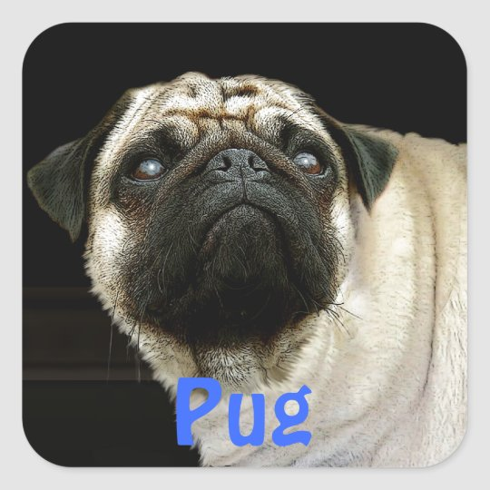 Pug Dog & Cute Pet-lover Stickers